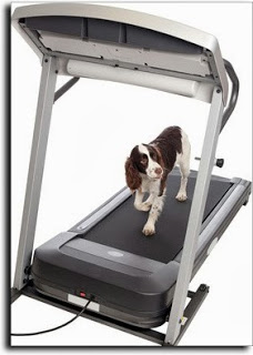 Treadmill Introduction