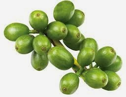 Quality Green Coffee Extract